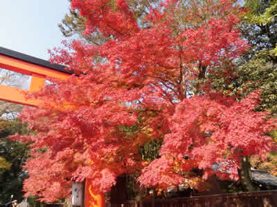 kyoto2013120203.jpg
